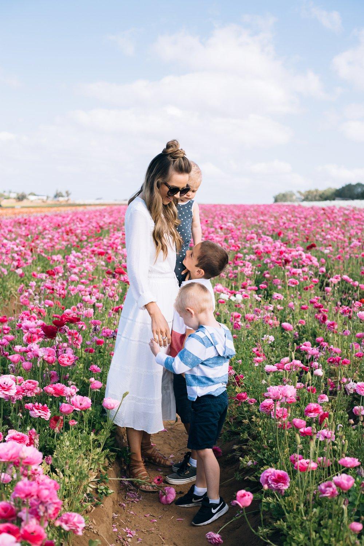 Merrick's Art   Carlsbad Flower Fields