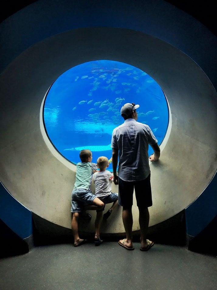 Frost Science Museum in the aquarium