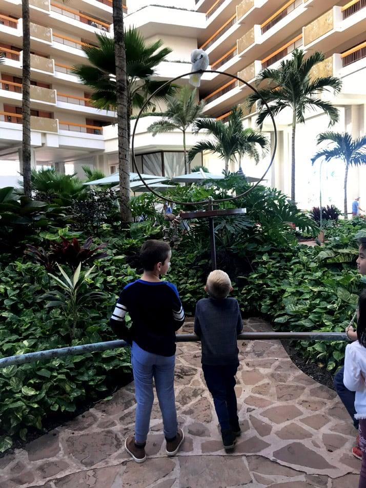 Birds in the Hyatt Maui Lobby